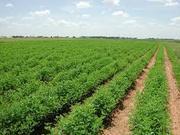 50 Bigha land just Rs. 30000000 in Thanagazi ,  alwar