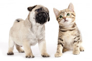 Online Pet Store in Jaipur & Udaipur for Buy-Sell Birds,  Cats,  Dogs