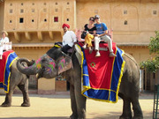 EleFanJoy: Elephant Ride & Safari In Jaipur