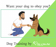 Dog Training Services in Udaipur | Dog Trainers in Udaipur