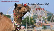 Rajasthan Tour Packages | Pushkar Camel Fair Festival 2019