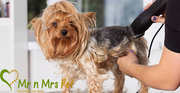 Dog Grooming Services: Dog Groomers in Jaipur - Mr n Mrs Pet