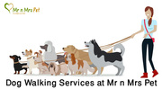 Dog Walking Services: Dog Walkers in Jaipur - Mr n Mrs Pet