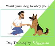 Dog Training Services: Dog Trainers in Jaipur - Mr n Mrs Pet