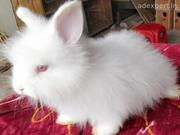 Buy Healthy Bunnies for Sale in Noida at Affordable Price
