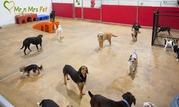 Dog Boarding Services Dog Hostel in Ajmer - Mr n Mrs Pet