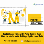 Domestic Pest Control Services in Jaipur | Best Pest Control Solutions