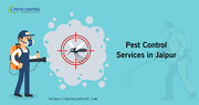 Best Sanitization and Disinfection Services in Jaipur